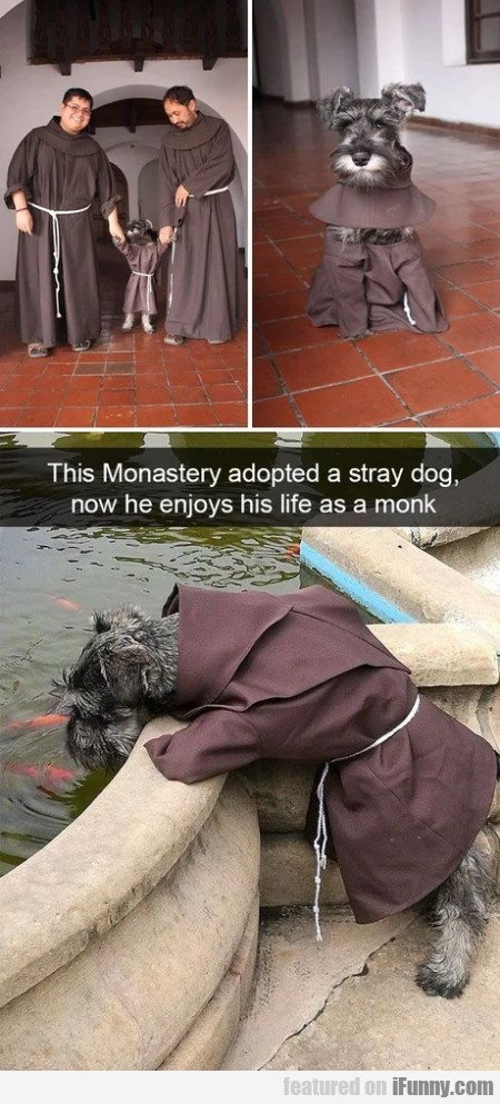 This Monastery Adopted A Stray Dog, Now He...