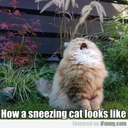 How A Sneezing Cat Looks Like