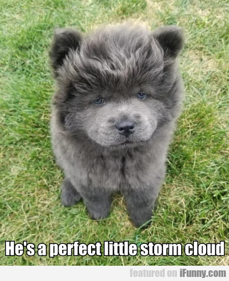 He's A Perfect Little Storm Cloud