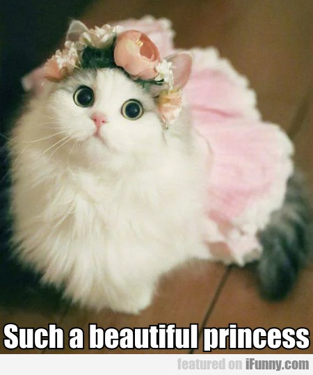 Such A Beautiful Princess