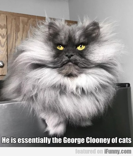 He Is Essentially The George Clooney Of Cats