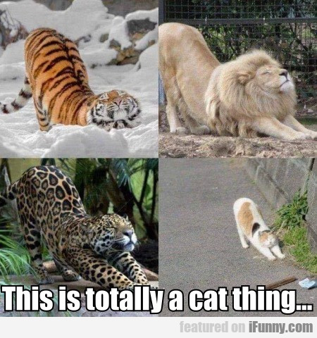 This Is Totally A Cat Thing