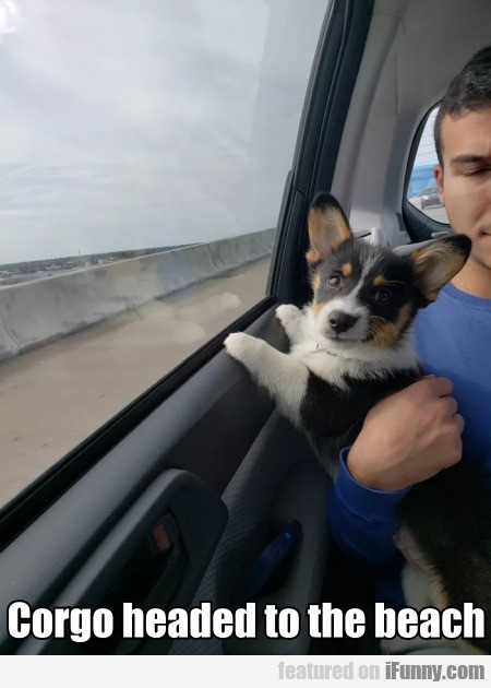 Corgo Headed To The Beach