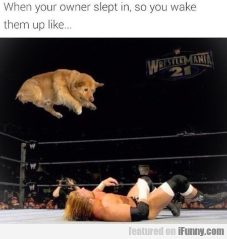 When Your Owner Slept In, So You Wake Them...