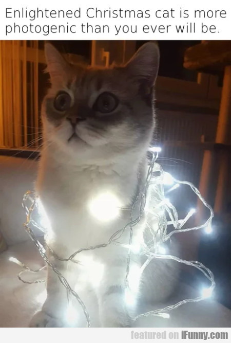 Enlightened Christmas Cat Is More Photogenic