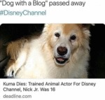 Dog With A Blog Passed Away