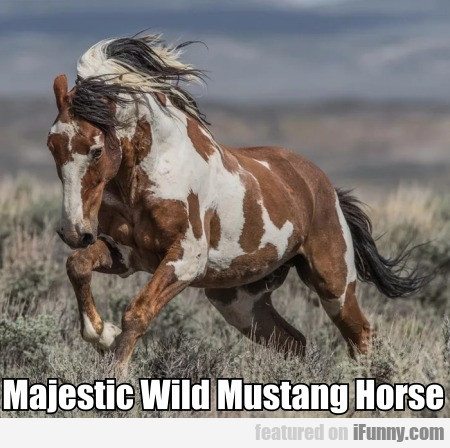 Majestic Wild Mustang Horse