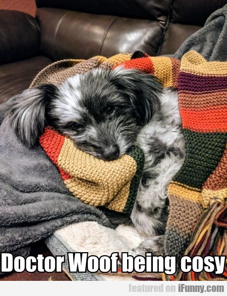 Doctor Woof Being Cosy