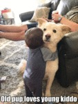 Old Pup Loves Young Kiddo
