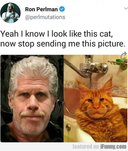 Yeah I Know I Look Like This Cat, Now Stop