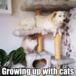 Growing Up With Cats