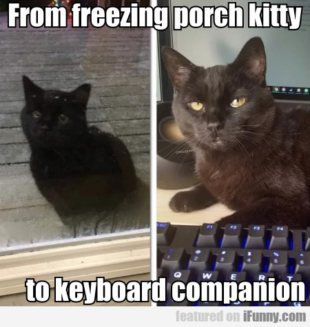 From freezing porch kitty to keyboard companion...