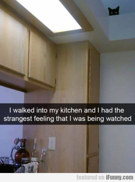 I Walked Into My Kitchen And I Had The Strangest..