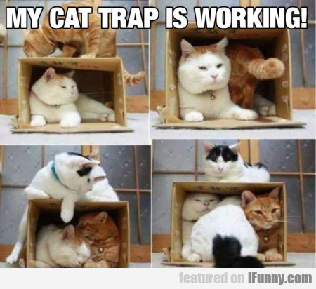 My cat trap is working
