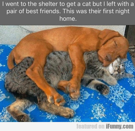 I went to the shelter to get a cat but I left with