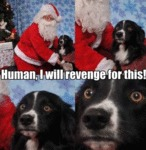 Human, I Will Revenge For This!