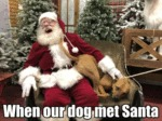 When Our Dog Met Santa