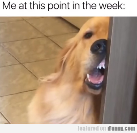 Me at this point in the week