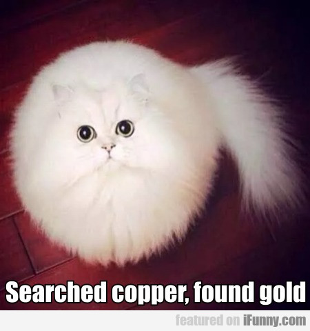 Searched Copper, Found Gold