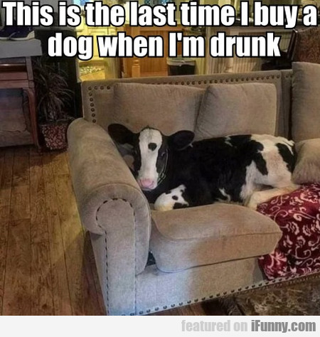 This is the last time I buy a dog when I'm drunk..