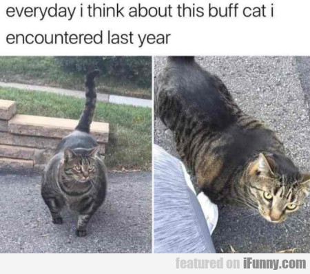 Everyday I think about this buff cat I encountered
