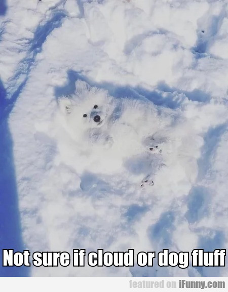 Not sure if cloud or dog fluff...