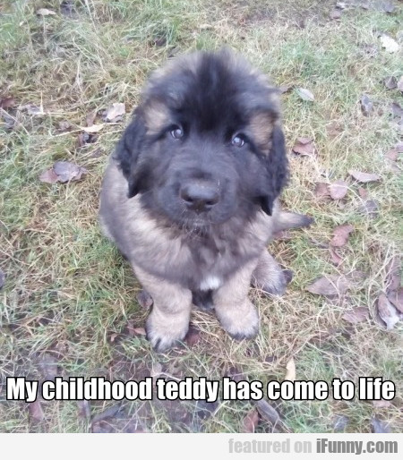 My childhood teddy has come to life