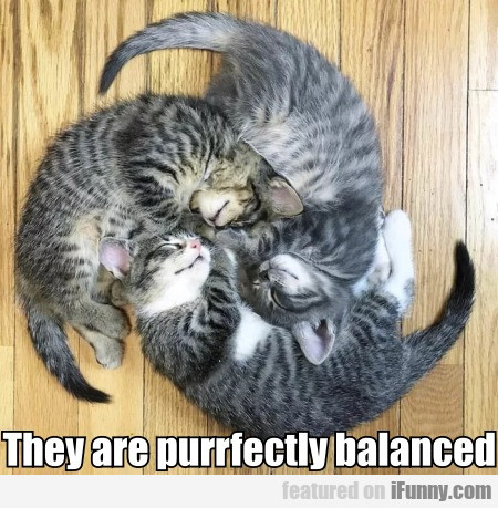 They are purrfectly balanced