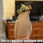 This Is Capitalist Napoleon Bird