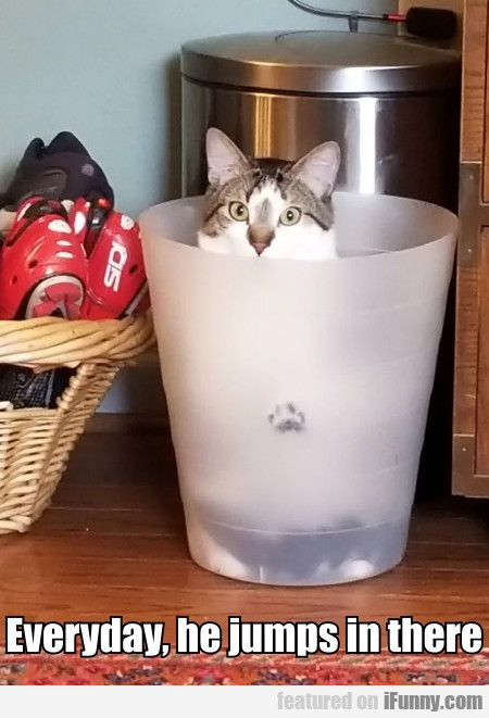 Everyday, He Jumps In There