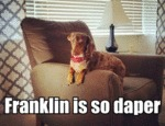 Franklin Is So Daper