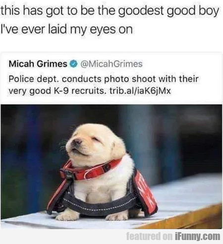 This Has Got To Be The Goodest Good Boy I've...
