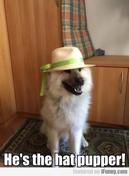He's The Hat Pupper!