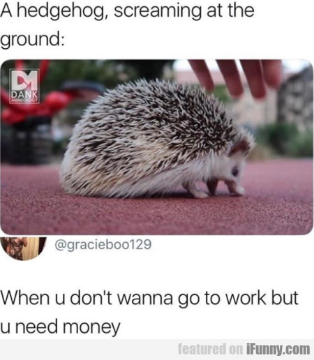 A Hedgehog, Screaming At The Ground