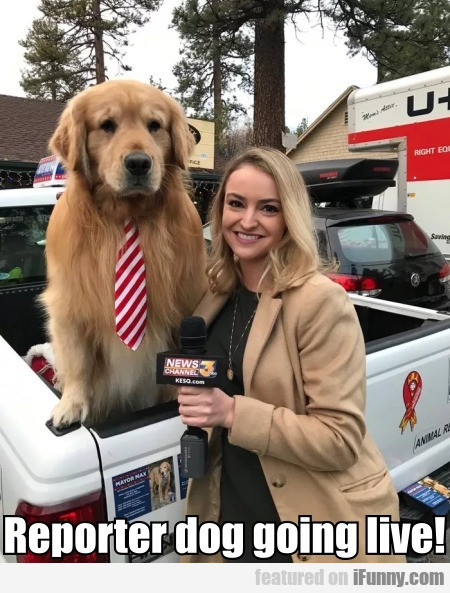 Reporter Dog Going Live!