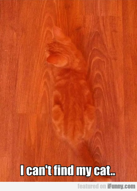 I Can't Find My Cat