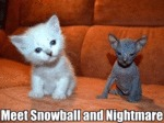 Meet Snowball And Nightmare