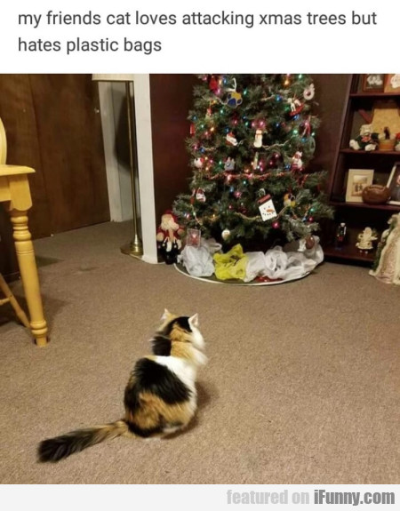 My Friends Cat Loves Attacking Xmas Trees