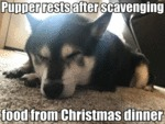 Pupper Rests After Scavenging Food From...