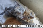Time For Your Daily Kitten Hugs