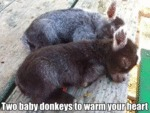 Two Baby Donkeys To Warm Your Heart