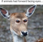 If Animals Had Forward Facing Eyes...