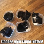 Choose Your Super-kitten!