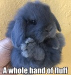 A Whole Hand Of Fluff