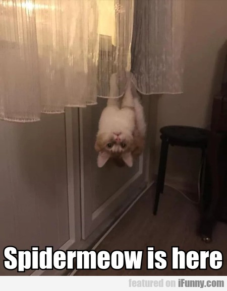 Spidermeow Is Here