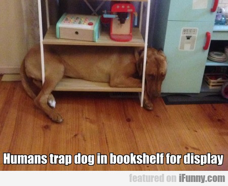 Humans Trap Dog In Bookshelf For Display