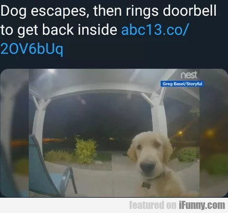 Dog Escapes Then Rings Doorbell To Get Back Inside