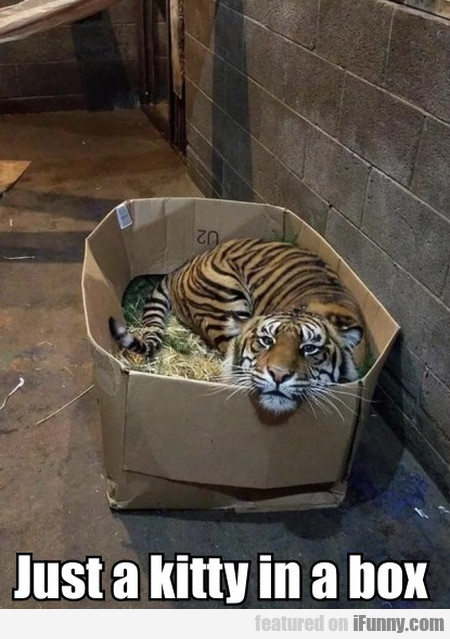 Just A Kitty In A Box