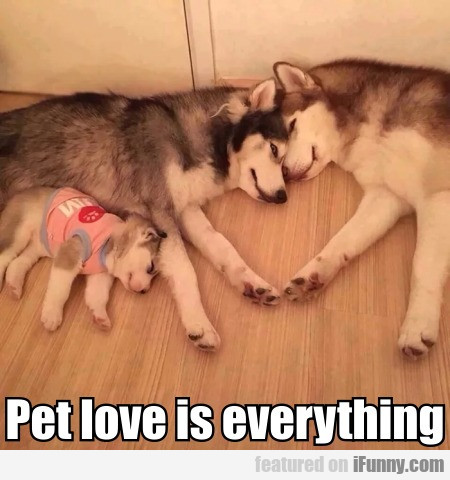 Pet Love Is Everything