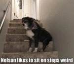 Nelson Likes To Sit On Steps Weird